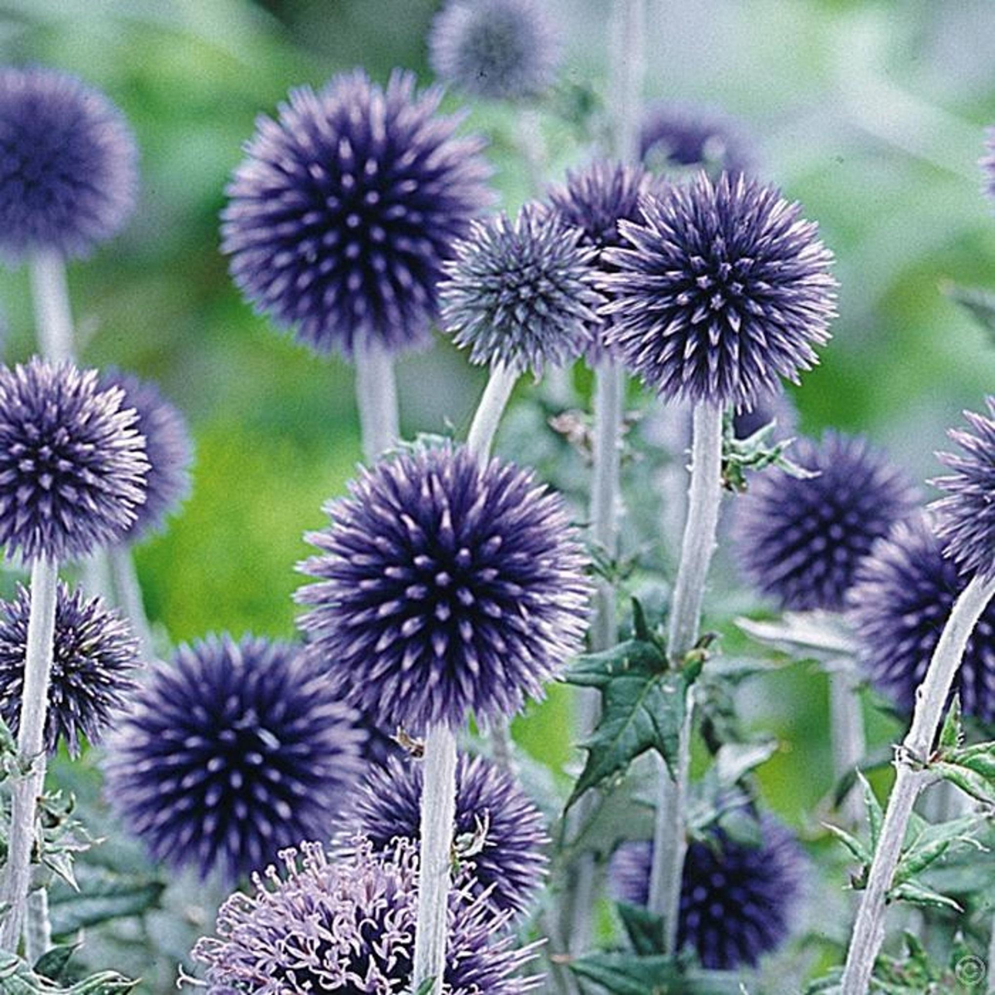 Vaste Planten Voor In De Tuin.Vaste Planten